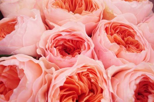 roses....swooning now.