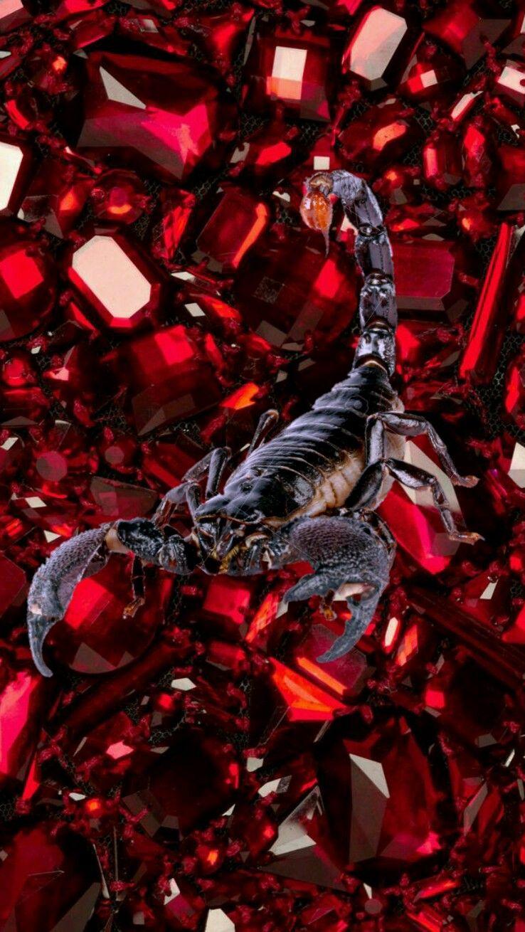 Black Scorpion On Rubies IPhone Wallpaper