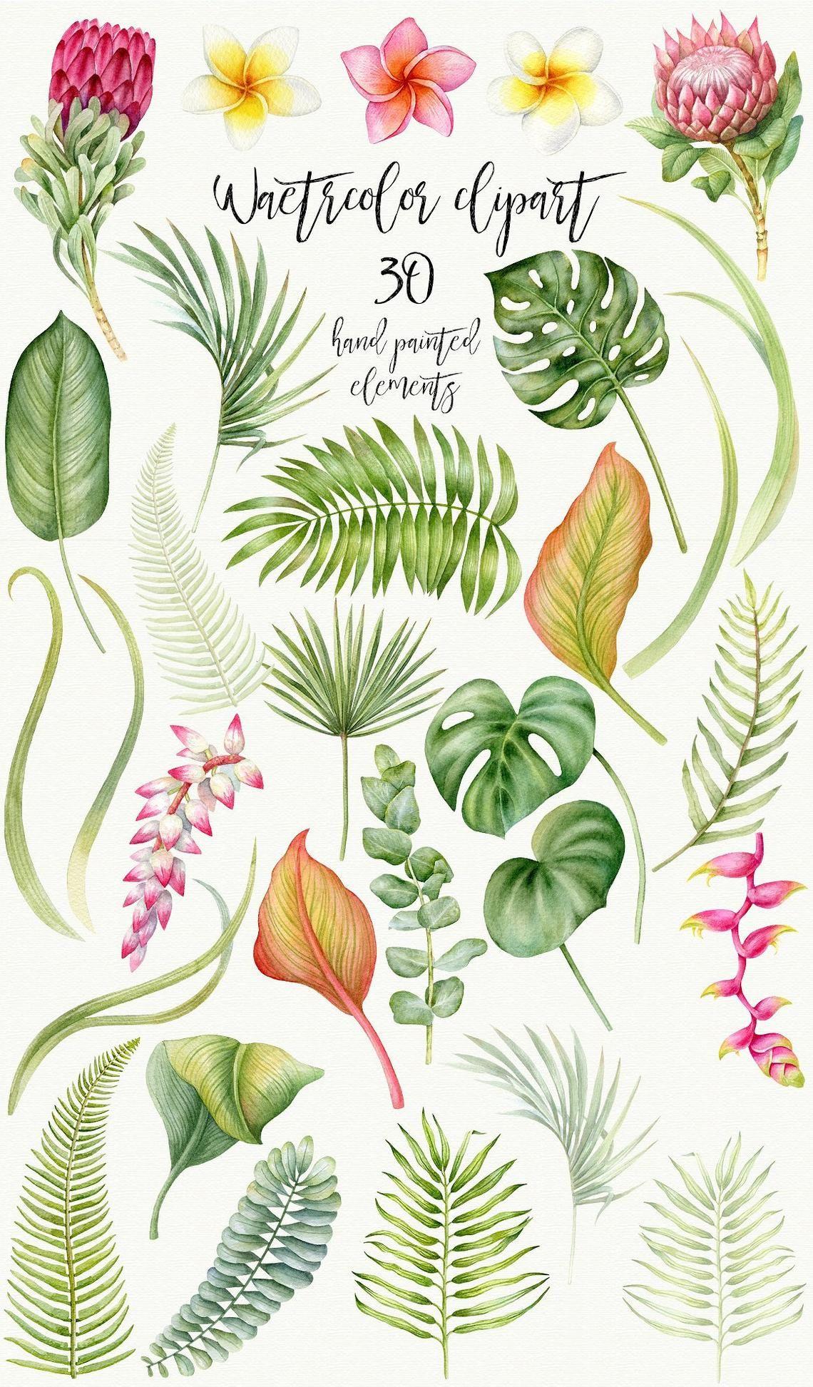 Watercolor Tropical Leaves Clip Art, Tropic, Protea, Palm Leaf, Plumeria, Hawaii clipart, Summer, Vacation, Eucalyptus -   17 tropical planting Art ideas