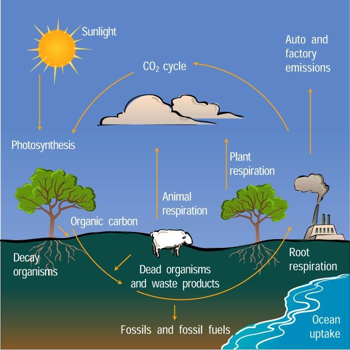 The Carbon Cycle Diagram Gcse Of Comedone Edu Pinterest Science And Cycling