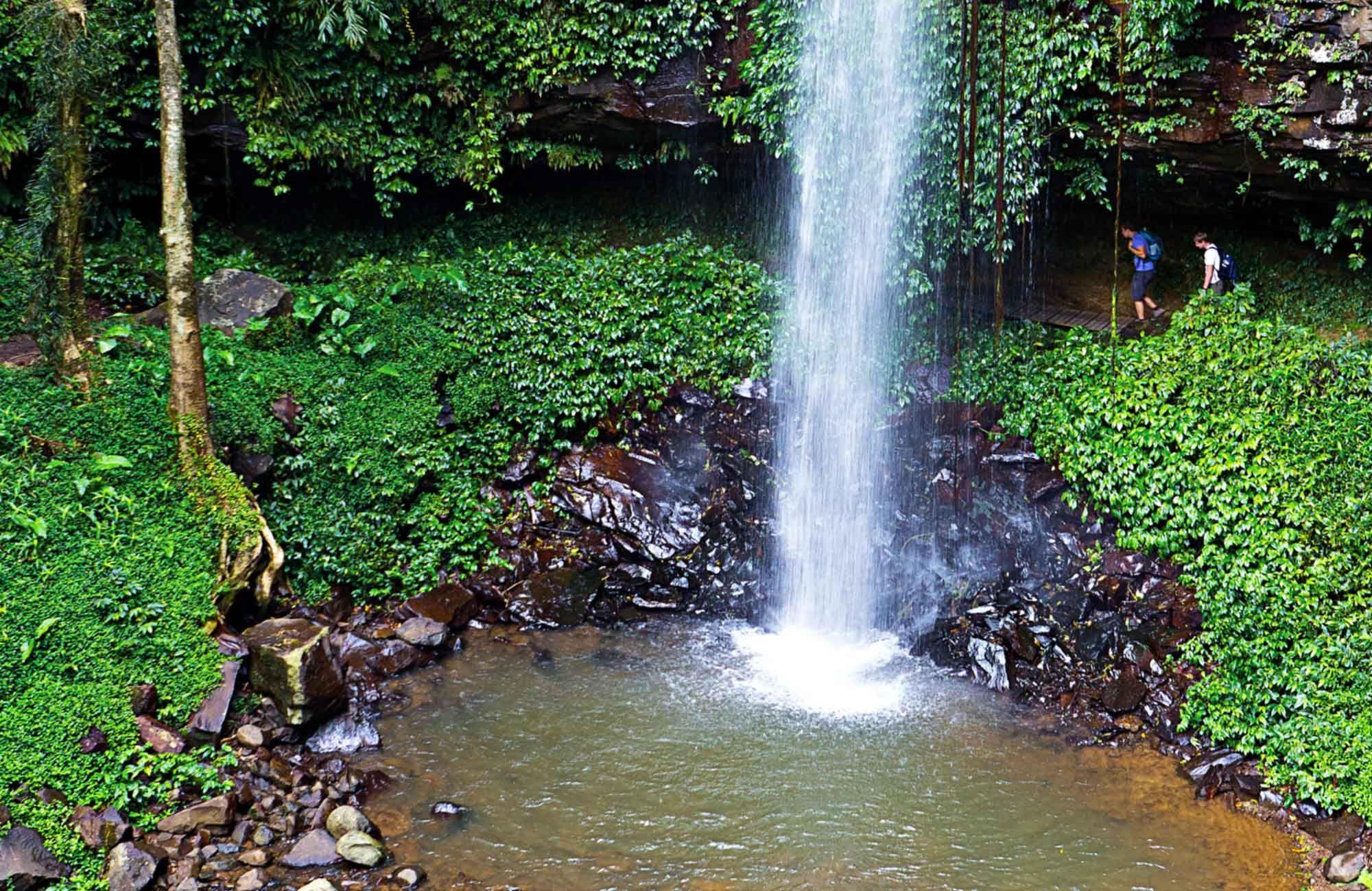 Crystal Shower Falls, Dorrigo National Park. Photo Rob