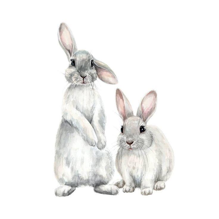 Anna Second Illustrator Auf Instagram Bunnies Hare In 2020 Mit Bildern Kaninchen Illustration Haschen Kunst Kaninchen Zeichnung