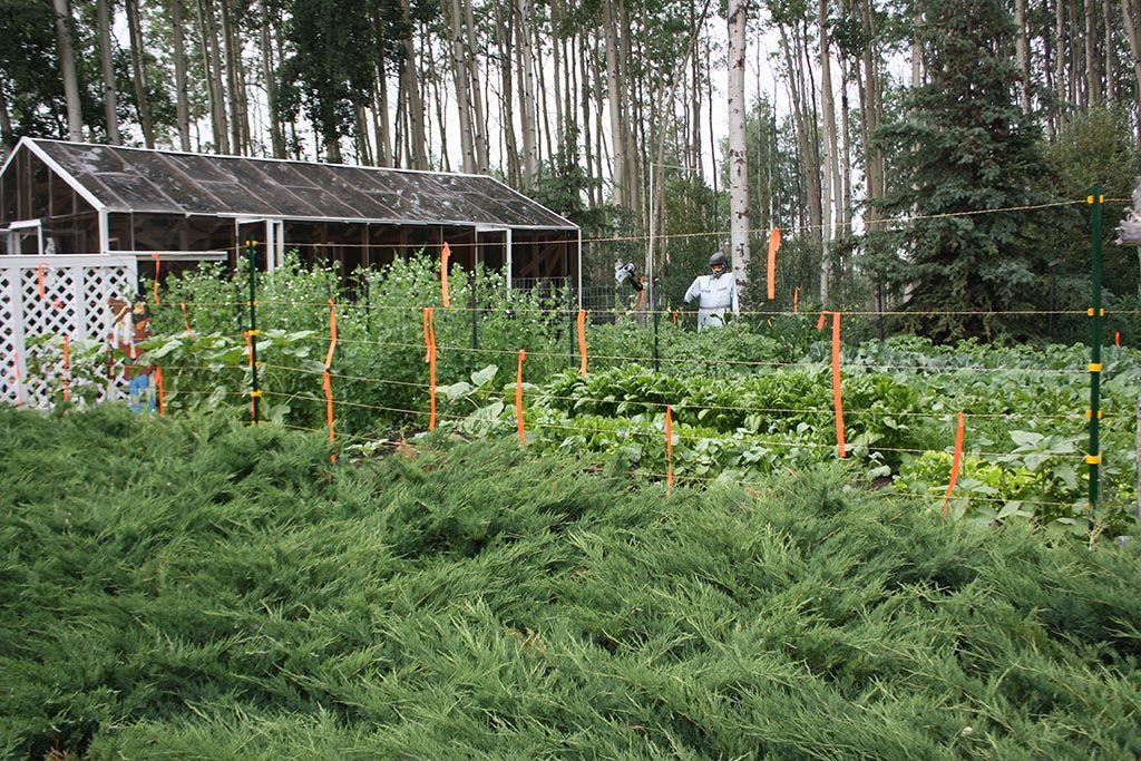 Electric Fence for Vegetable Garden Garden Pinterest Vegetable