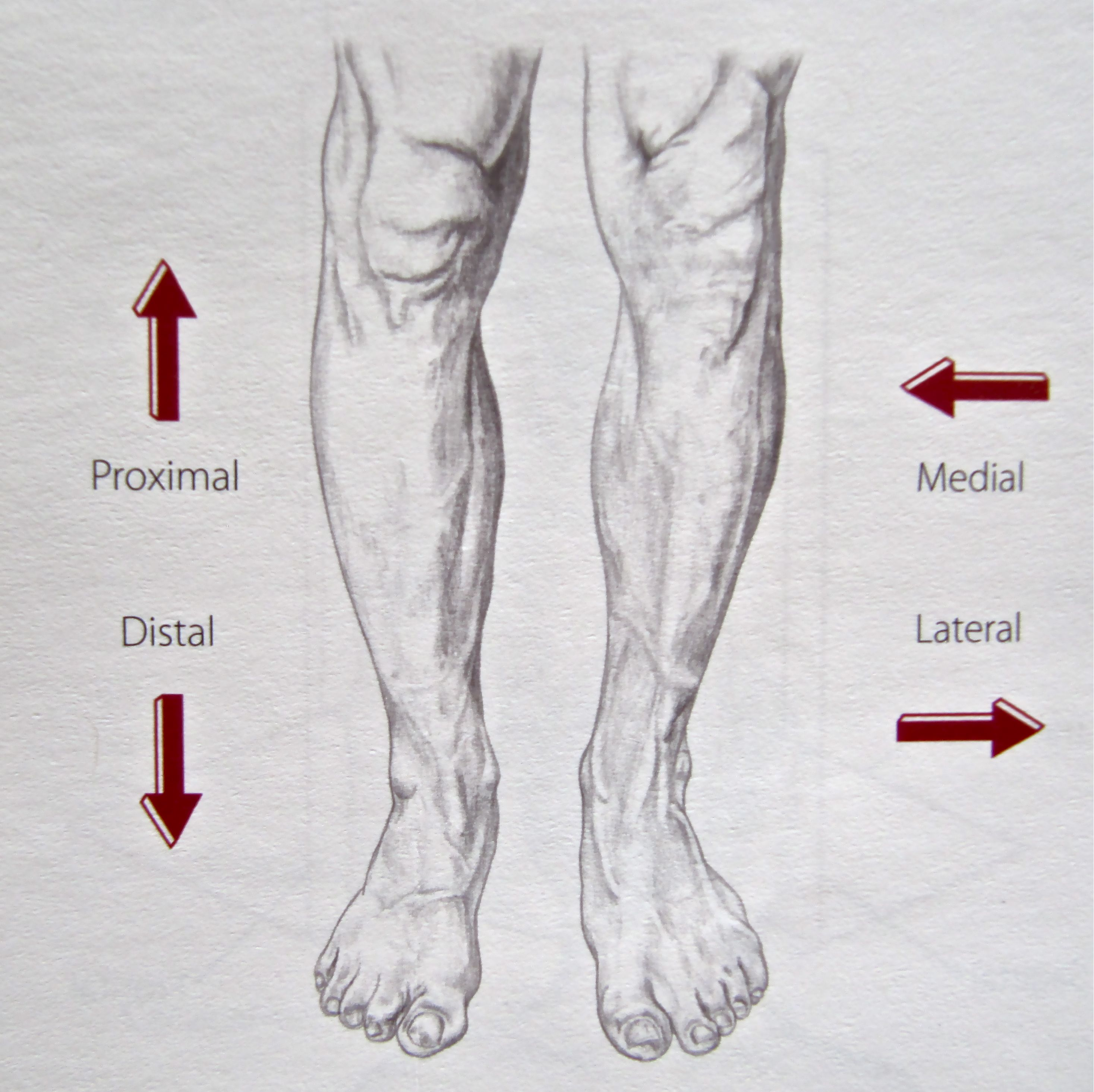 foreshortened feet and leg drawings | Notes on Anatomy and Physiology: Learning with the Hand and Elbow |