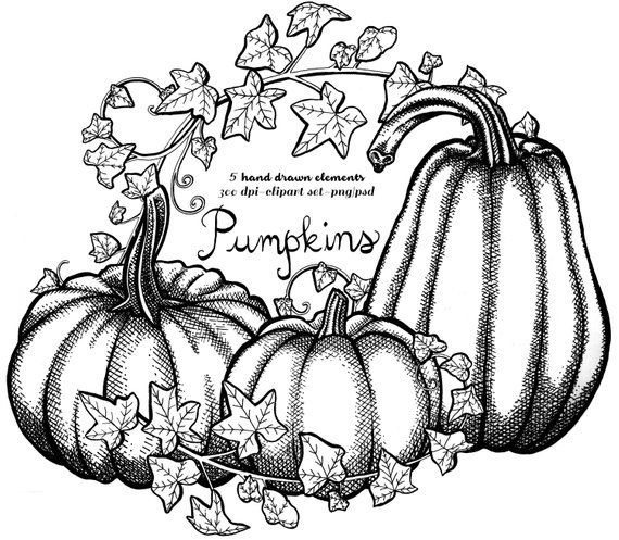 Fall Pumpkin Clipart. Instant Download. Pen & Ink