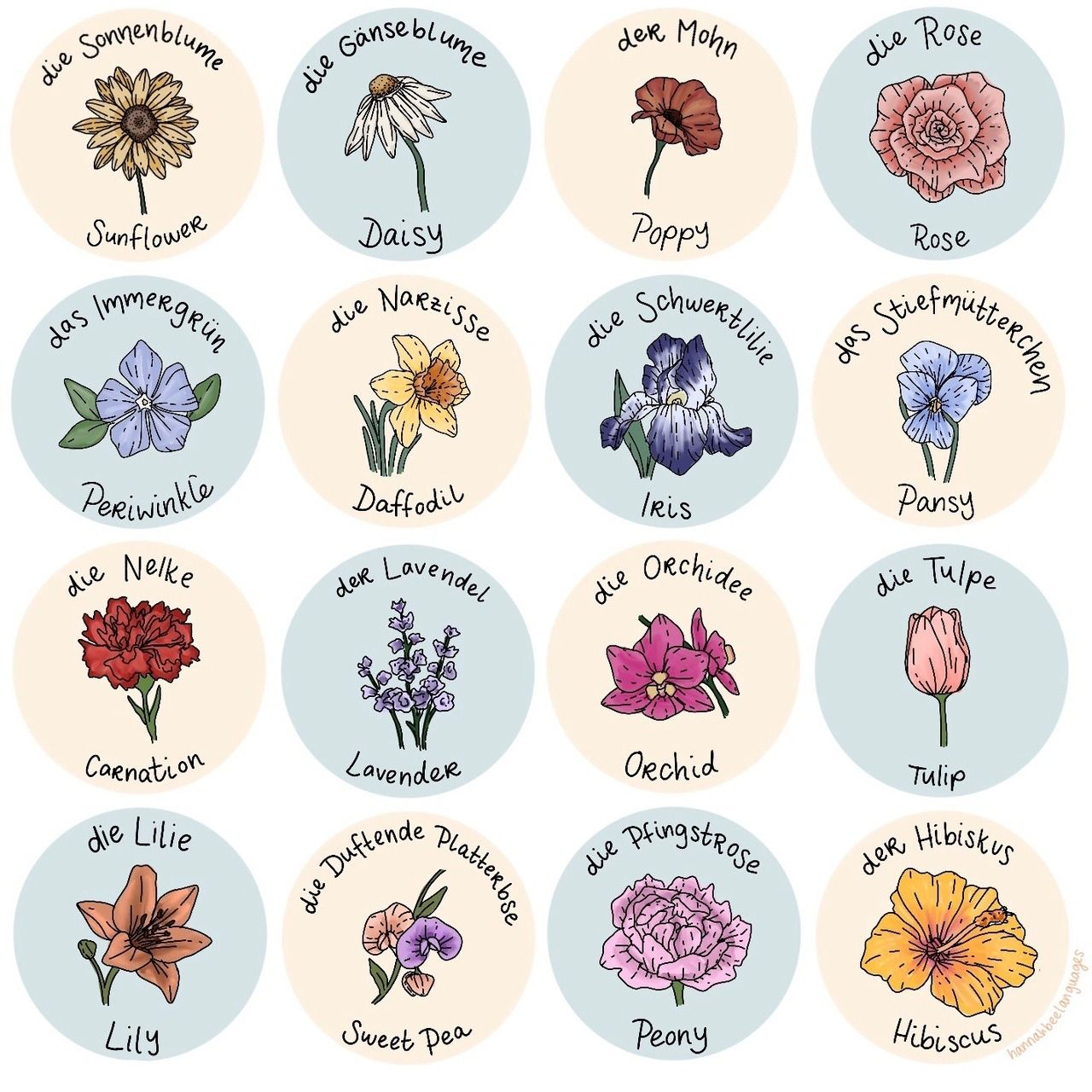 a Tired sophomore (With images) Flower names, Flowers