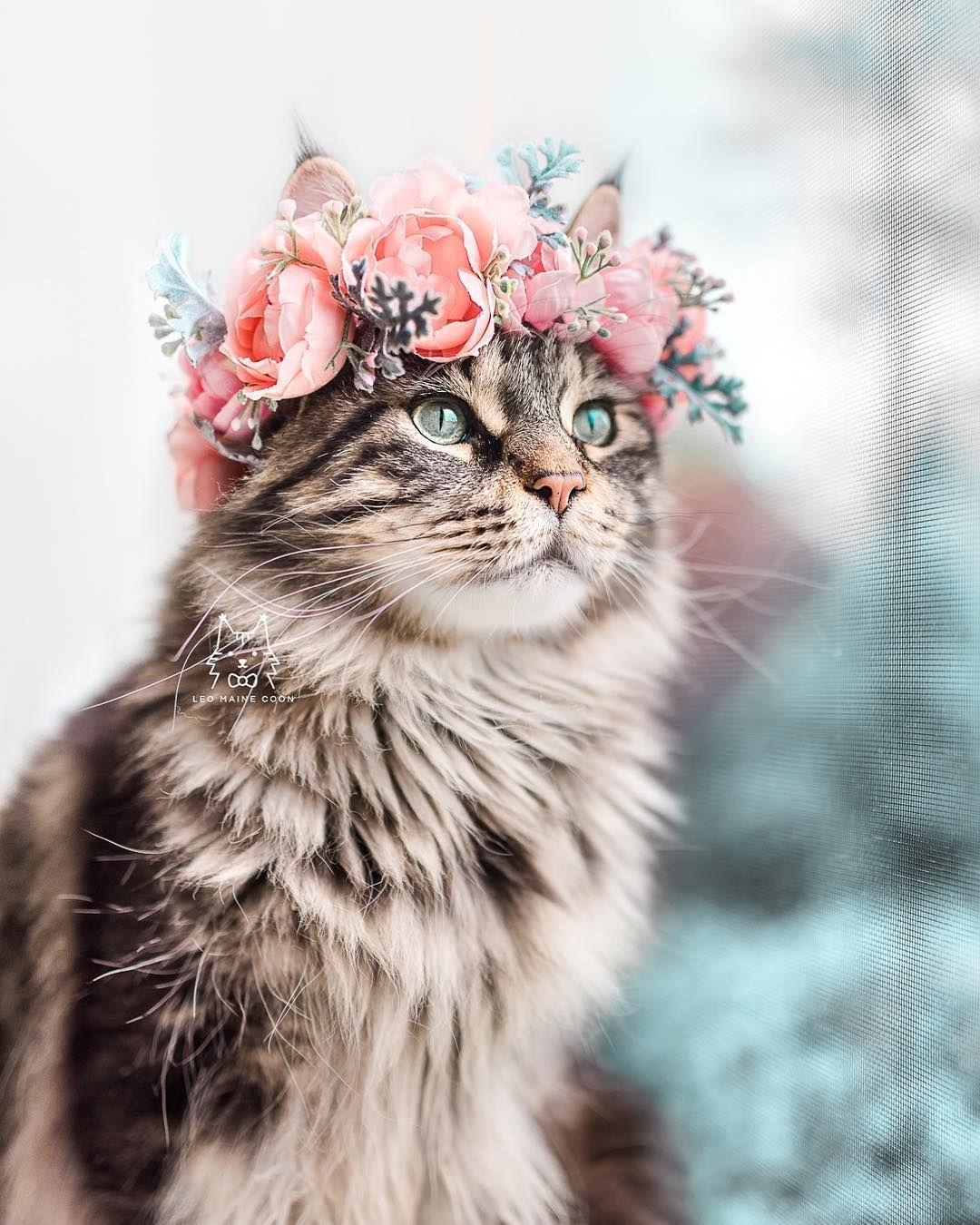"Leonidas & Orion on Instagram ""happy caturday! 💖 i get a"
