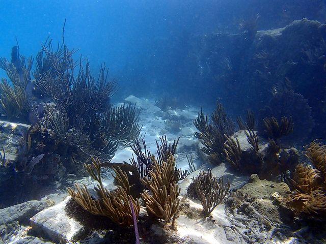 Underwater Seascape | Underwater Seascape