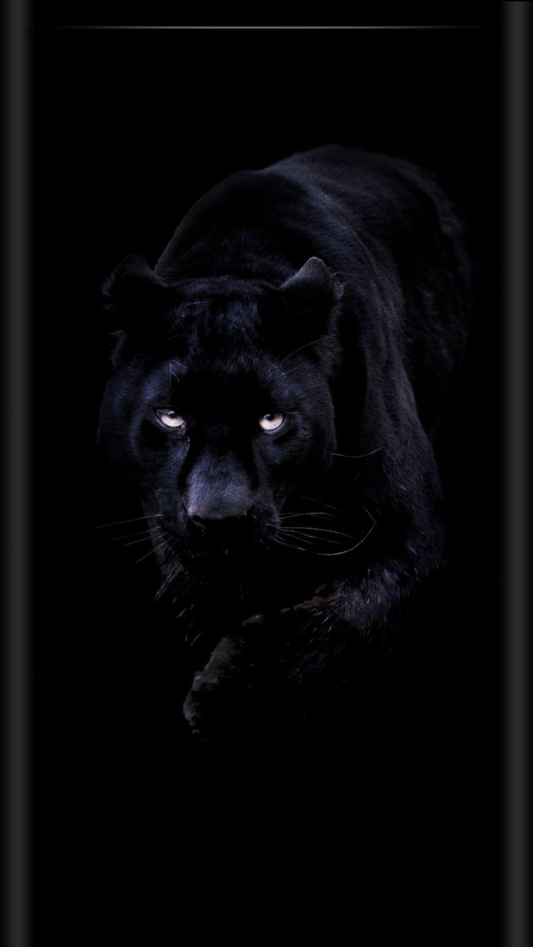 Обои Чёрная. Животные foto 7