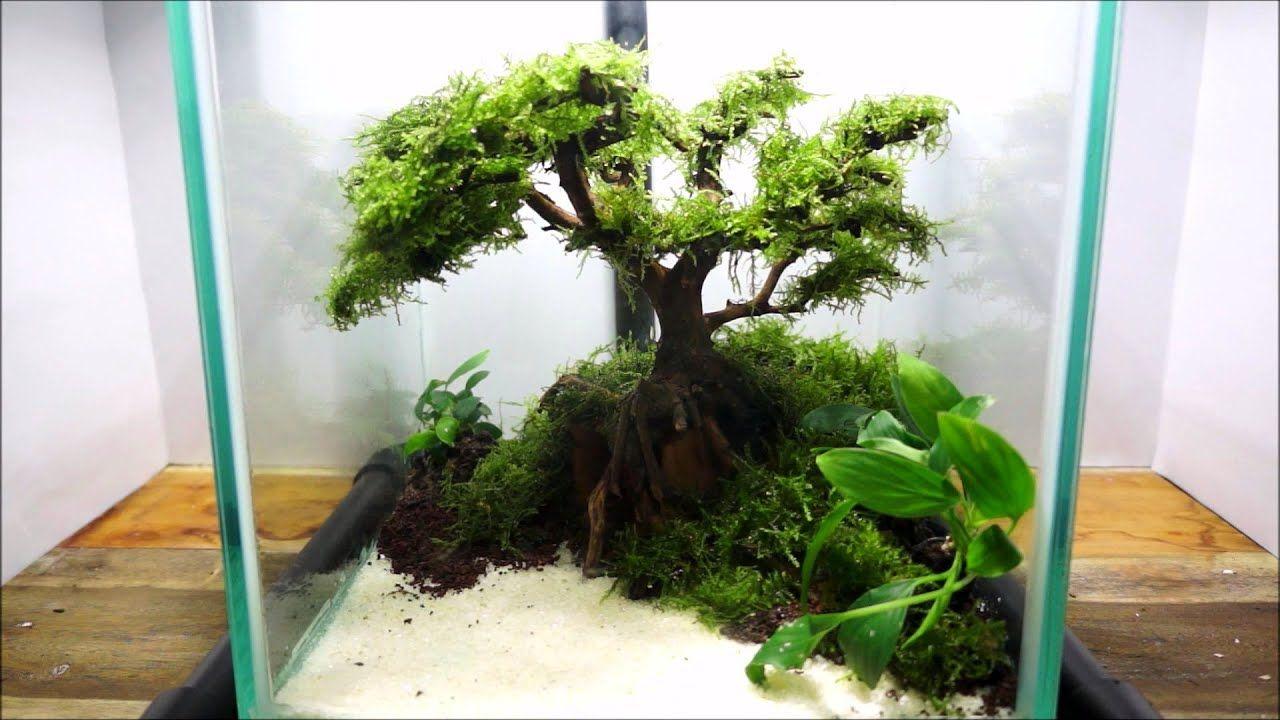 Aquariums Setting Aquarium Bonsai Tree Planted Aquarium Bonsai Tree Aquarium
