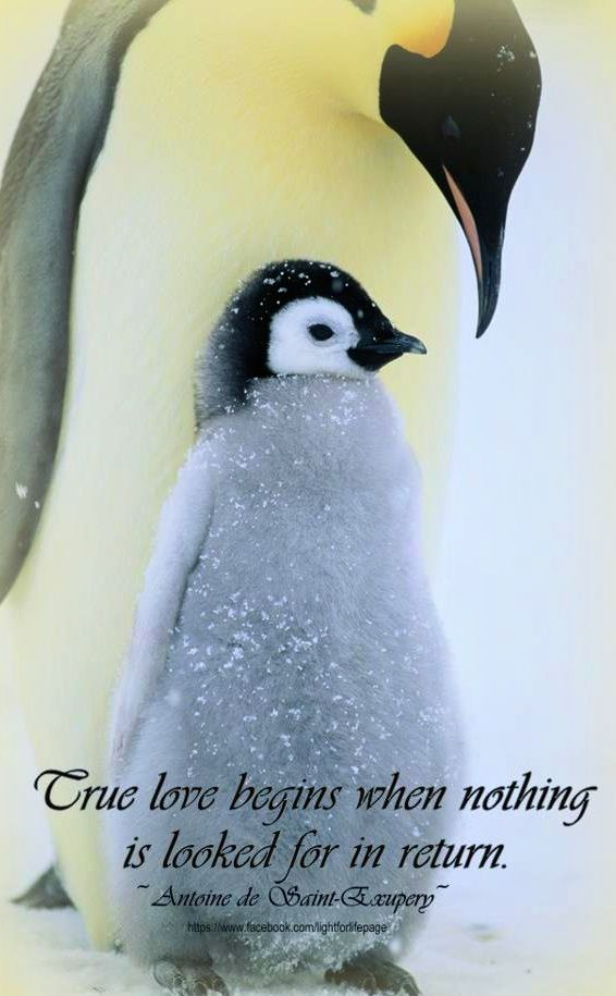 Penguin Love Quotes Impressive Love Quote Via Light For Life On Facebook At WwwFacebook