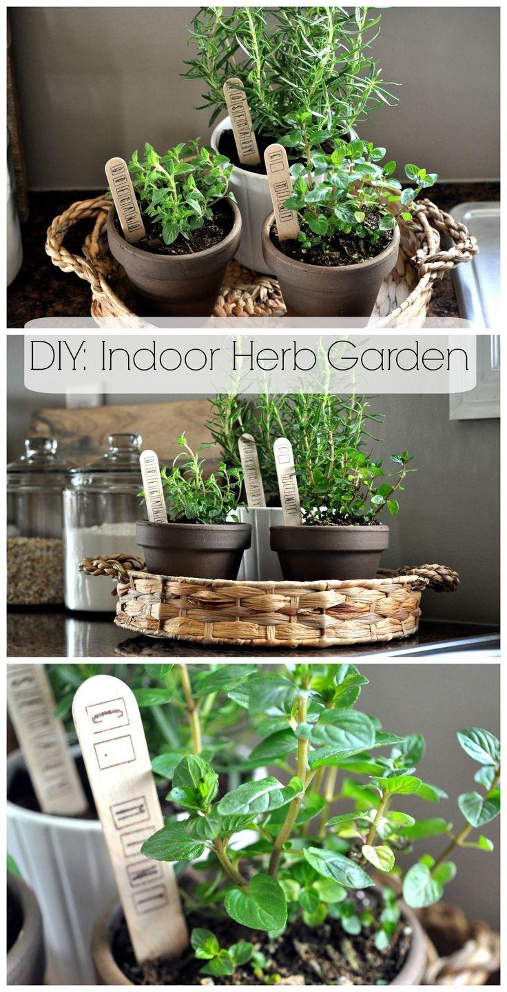 Indoor Herb Garden Diy Herb Garden Herbs Indoors Indoor Plants