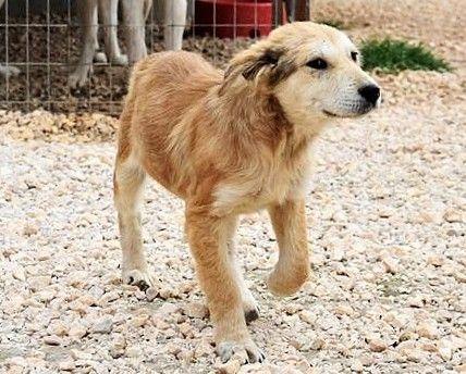 2017 03 05 Caruso 4 Hundehilfe Tiere Adoption