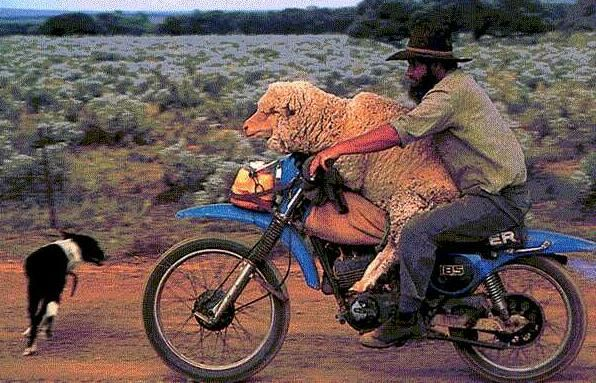 Funny-Motorbike-Animals-And-Speed-12