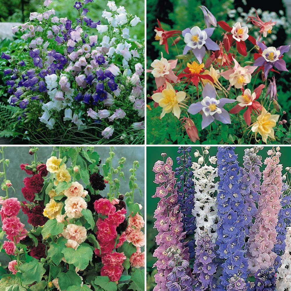 Cottage Garden Plants, Plants