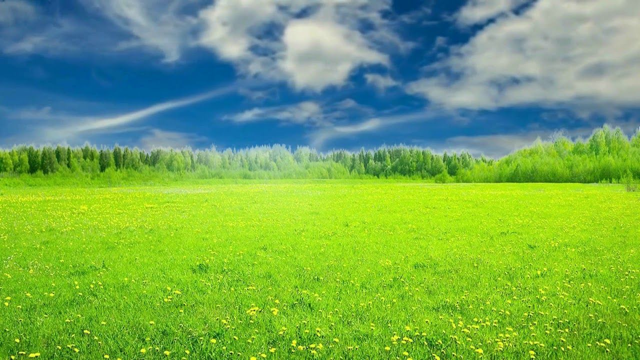 Hd 1080p Nature Grass Scenery Video Royalty Free Landscape Video 539 Scenery Landscape Nature
