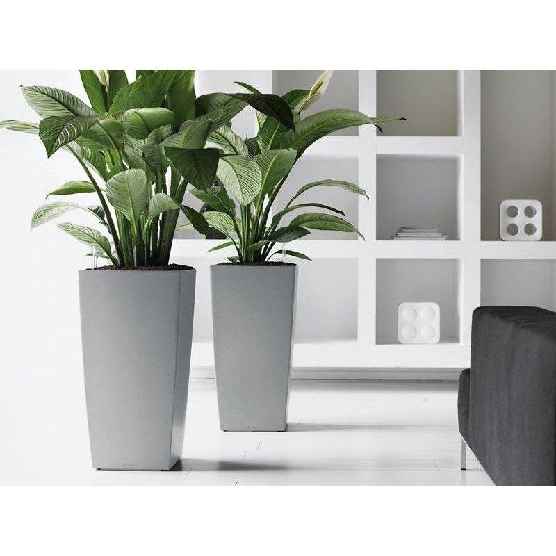 Lechuza Cubico Premium Planter Indoor Plants Office Plants Plants