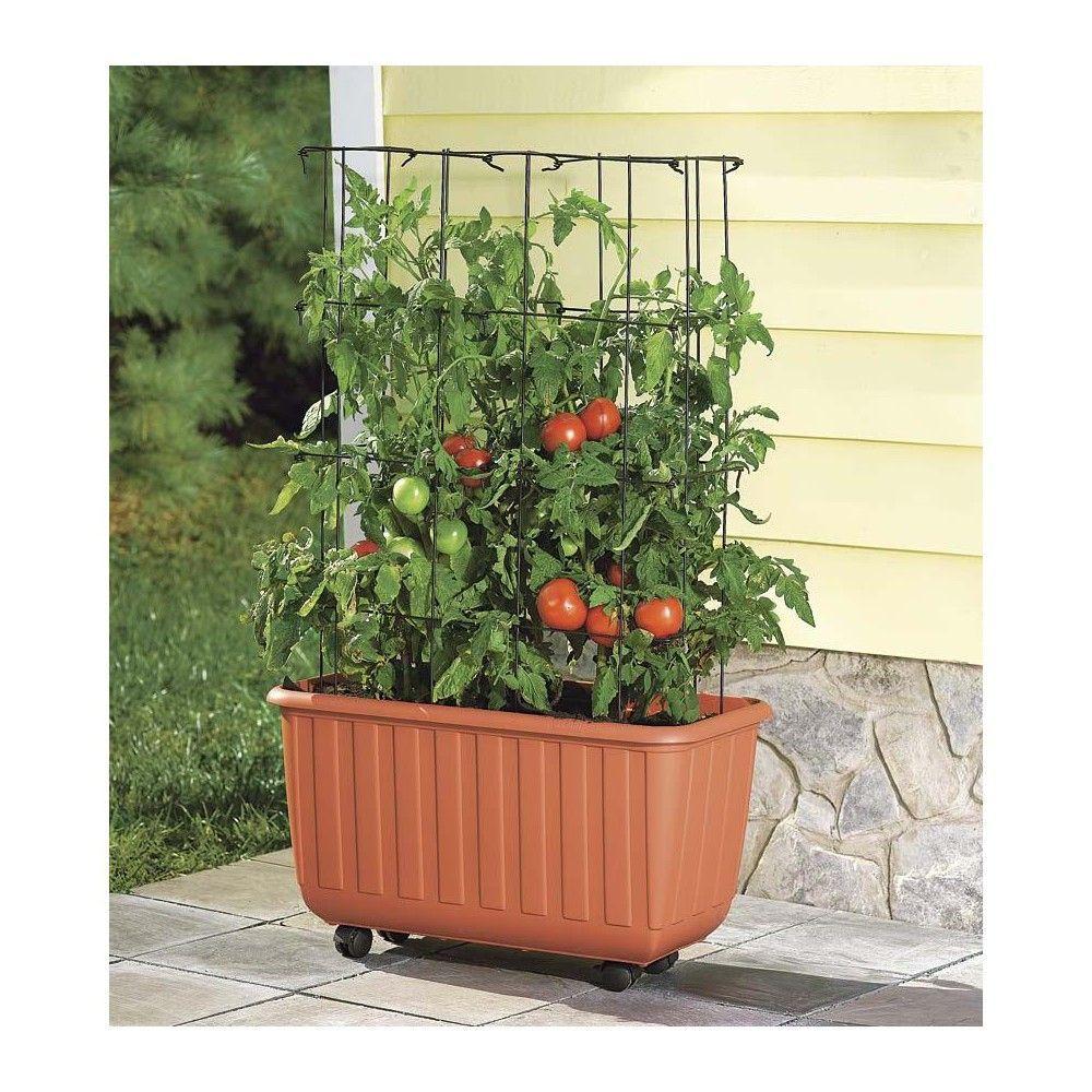 Rolling SelfWatering Tomato Planter With Metal Trellis