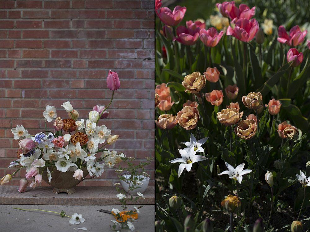 British spring flowers aesme flowers london aesme flowers british spring flowers aesme flowers london mightylinksfo