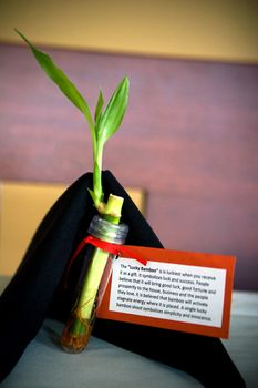 The Postwedding Brunch Ideas and Tips Lucky bamboo Favors and