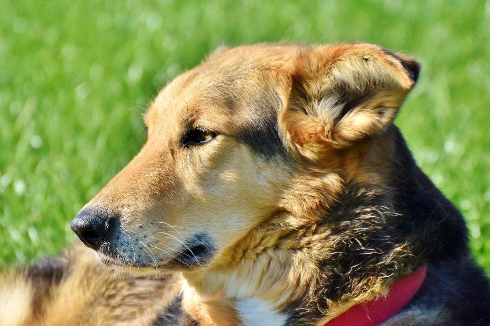 Buy Pet Supplies Online Buy Pets Best Dog Training Sick Dog