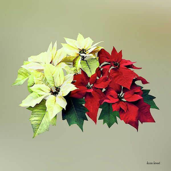 Bouquet Of Red And Yellow Poinsettia By Susan Savad Flower Art Poinsettia Beautiful Bouquet