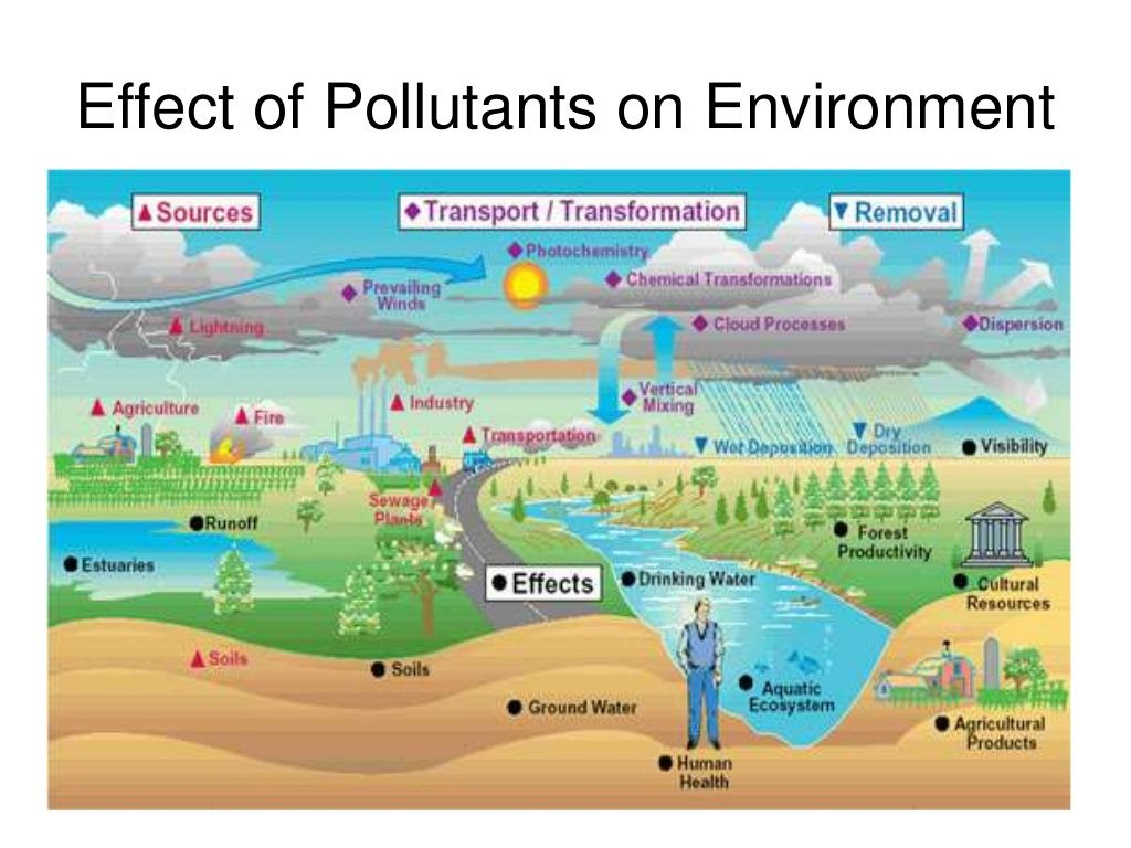 Effect Of Pollutants On Environment