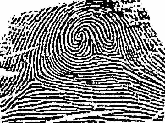 The Science Of Fingerprint Identification Or Dactylography Began Nearly 4 000 Years Ago In The Fertile Crescent Forensic Science Fingerprint Mystery Writing