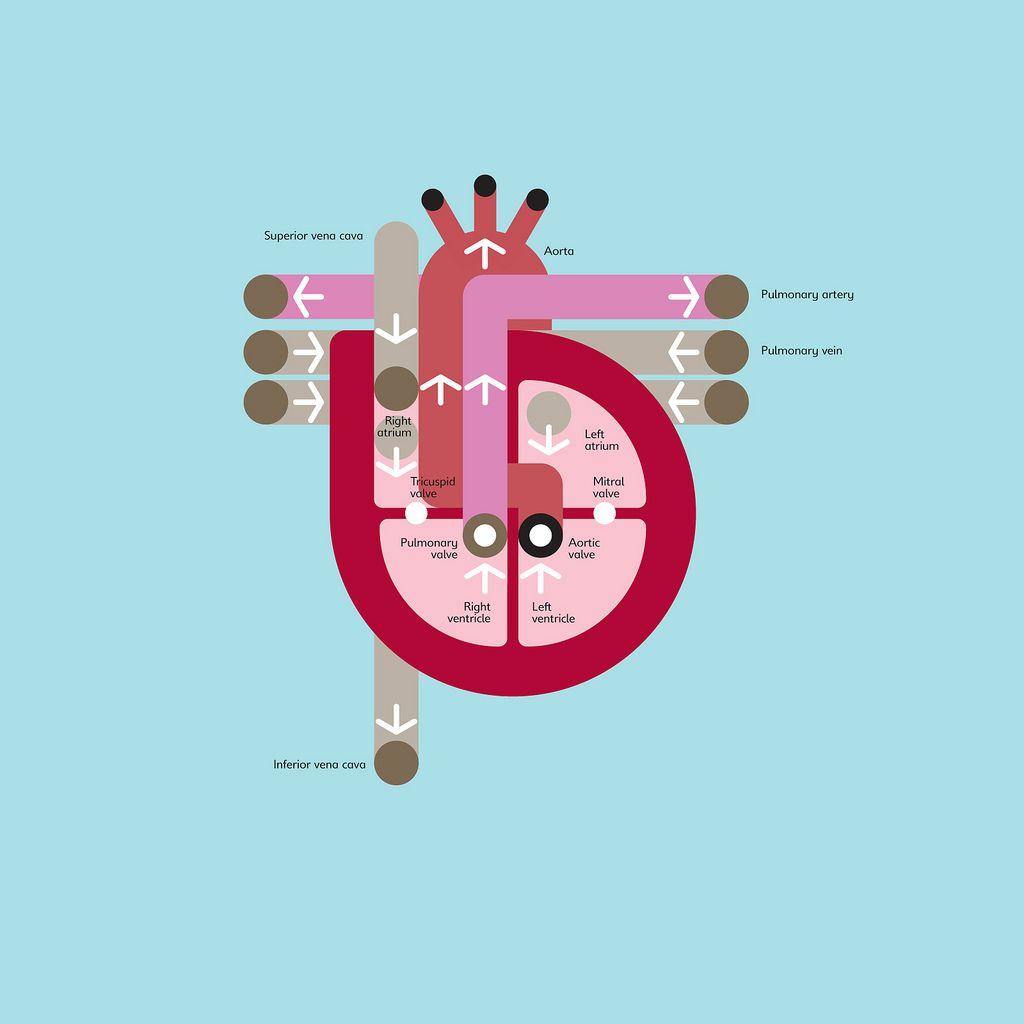 Pin by Vladimir Pavlikov on Illustrations & Graphics