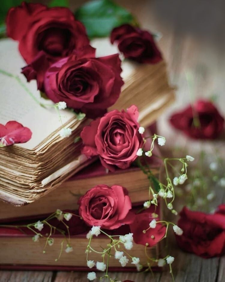 Pin By Helen Galushko On Between Flowers Beautiful Rose Flowers Book Flowers Flowers Photography
