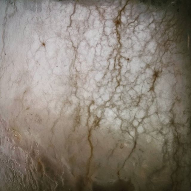Tangled webs. #mycelium #RadicalMycology #mycology #fungi