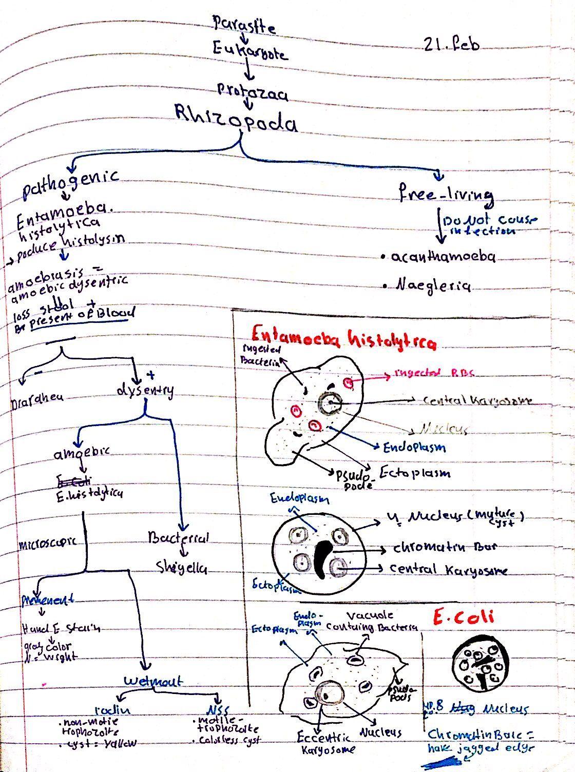 hight resolution of rhizopoda entameba