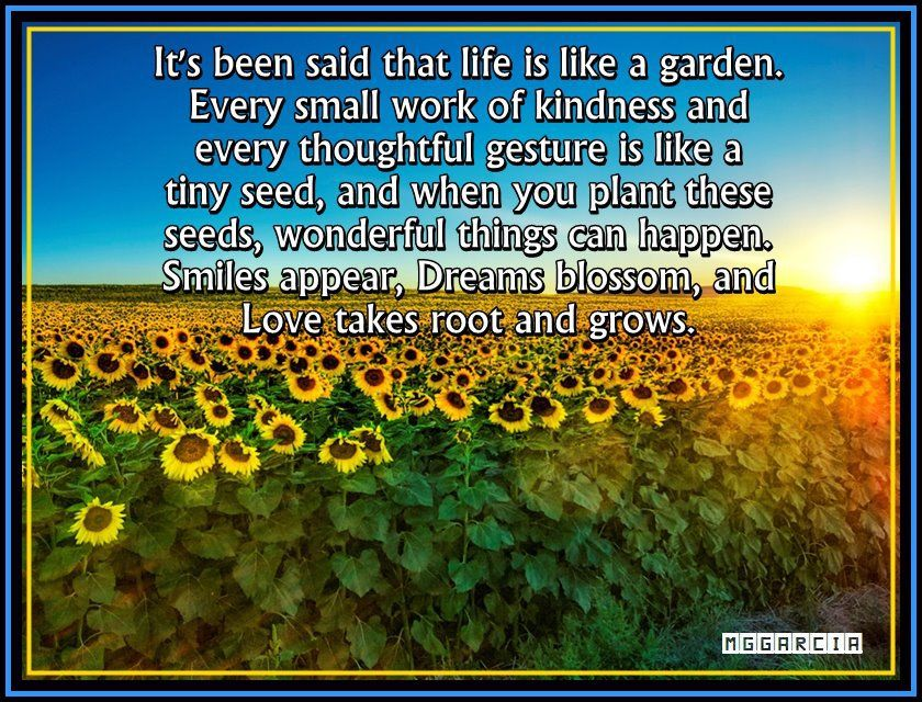 Life Is Like A Garden Sayings Pinterest
