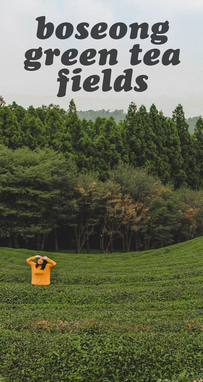 One of the best things to do in Korea is to get outdoors! The Boseong Green Tea Fields is one of the most gorgeous attractions to visit if you're looking to see the country. #koreatravel #boseong #outdoorstravel