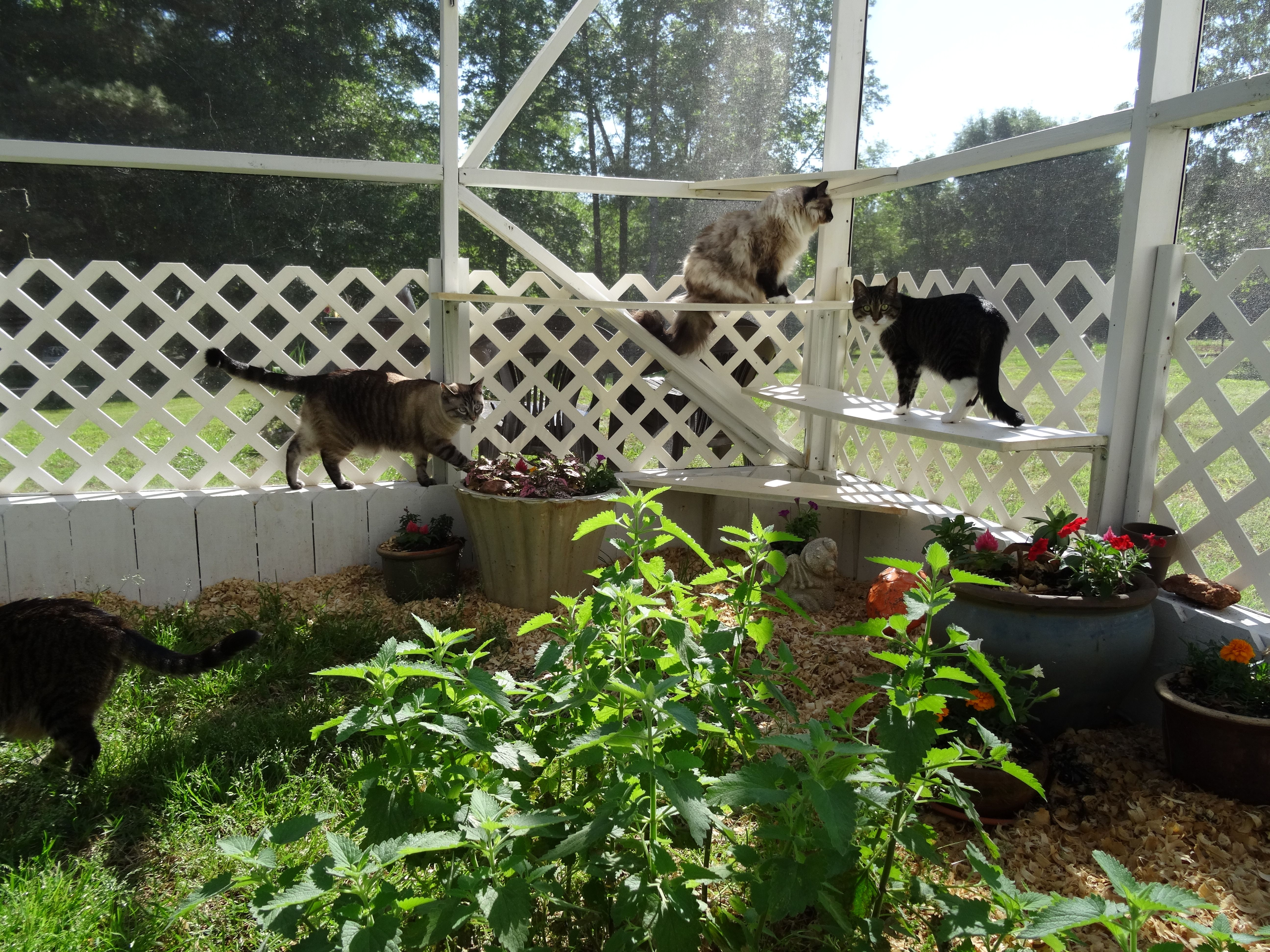 george lucy and daisy enjoying kitty garden catio outdoor