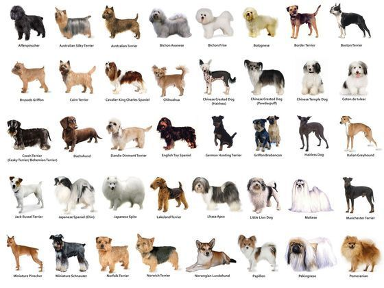 What Dog Breed Are You? Take This Quiz To Find Out! What