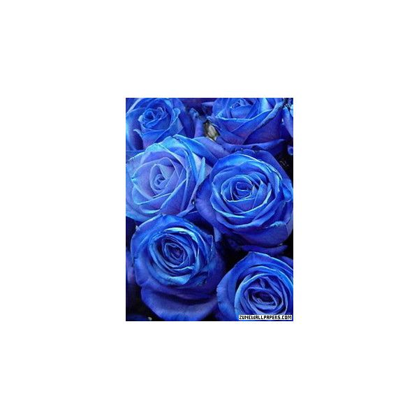 Blue Roses Zune Wallpaper ❤ liked on Polyvore featuring flowers - blue flower backgrounds