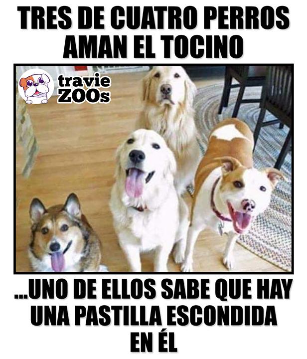 Por Eso No Esta Tan Feliz Memes De Perros Graciosos Memes De Perros Chistosos Memes Divertidos