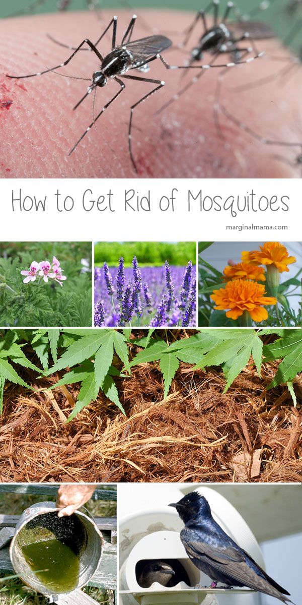 There are several methods to get rid of mosquitoes in your ...