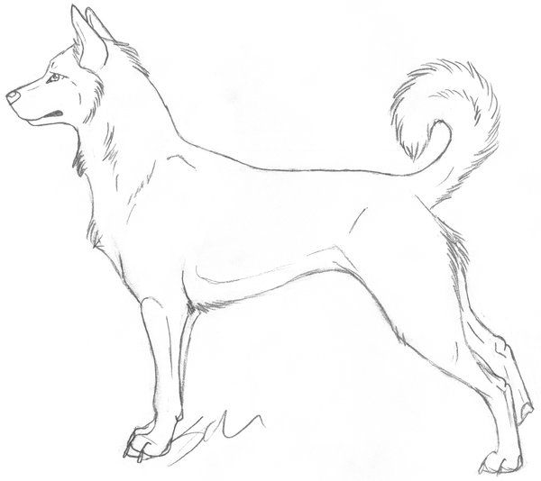 Canaan Dog Female Lineart by Italian-Pitbull on DeviantArt ...