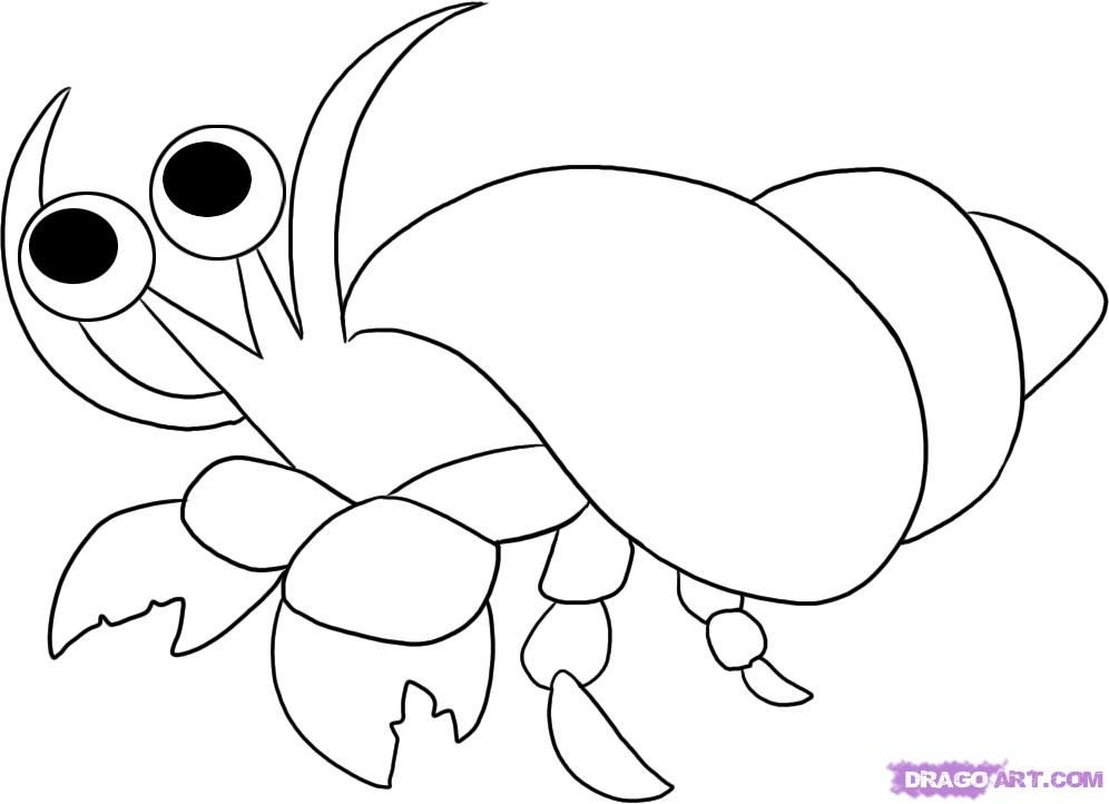 hermit crab coloring page # 19
