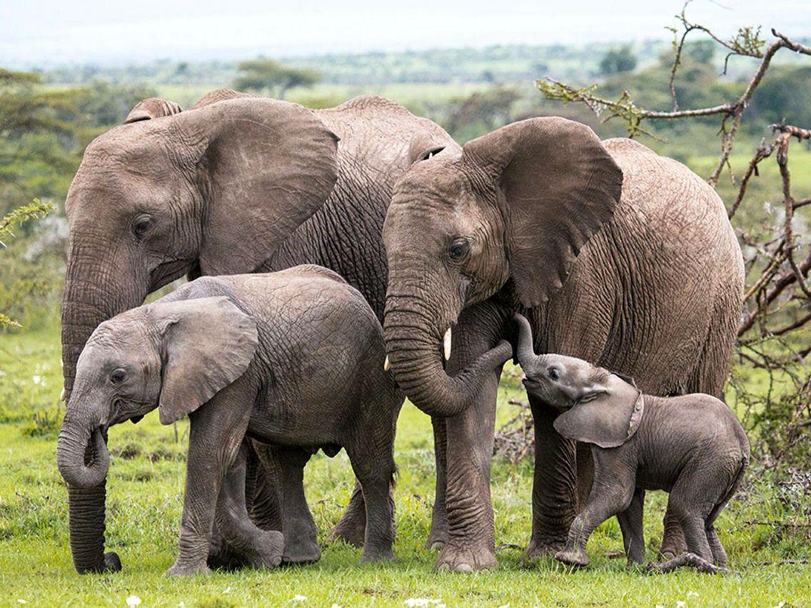 Картинки слона со слоненком