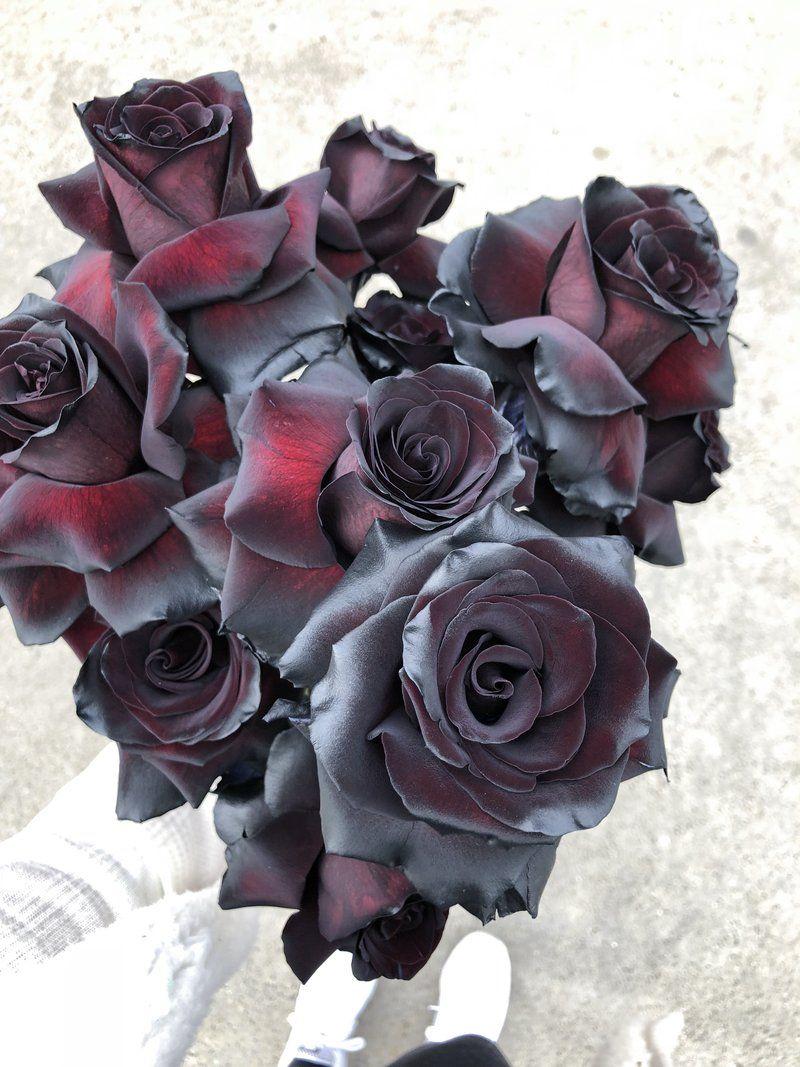 Black Roses Black Rose Flower Flower Delivery Flowers Delivered