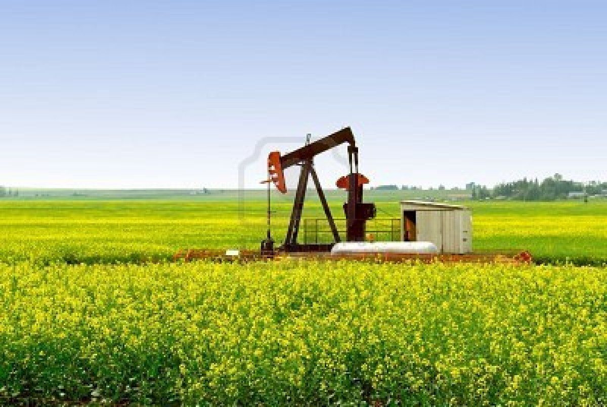 A natural gas pump jack in an Alberta canola rapeseed