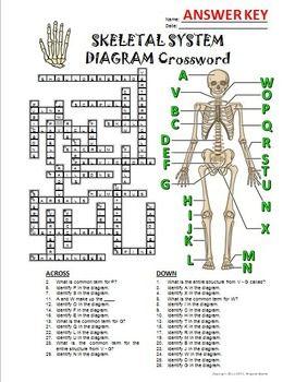 skeletal system crossword with diagram {editable} health Circulatory System Crossword Puzzle skeletal system crossword with diagram {editable}