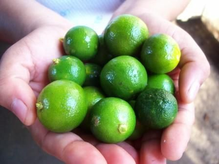 Health Benefits Of Calamansi Calamansi Lime Water Benefits