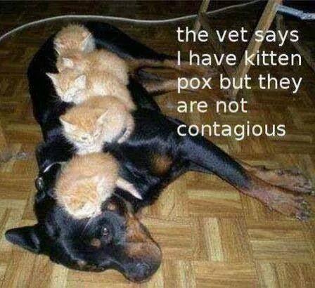 Kittenpokken