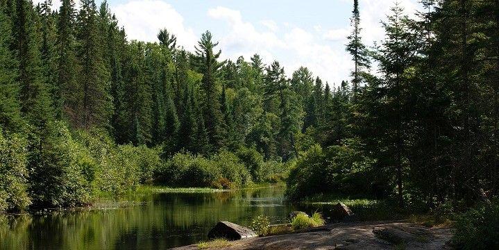 Algonquin Provincial Park, Ontario, Central Canada, Canada, North America