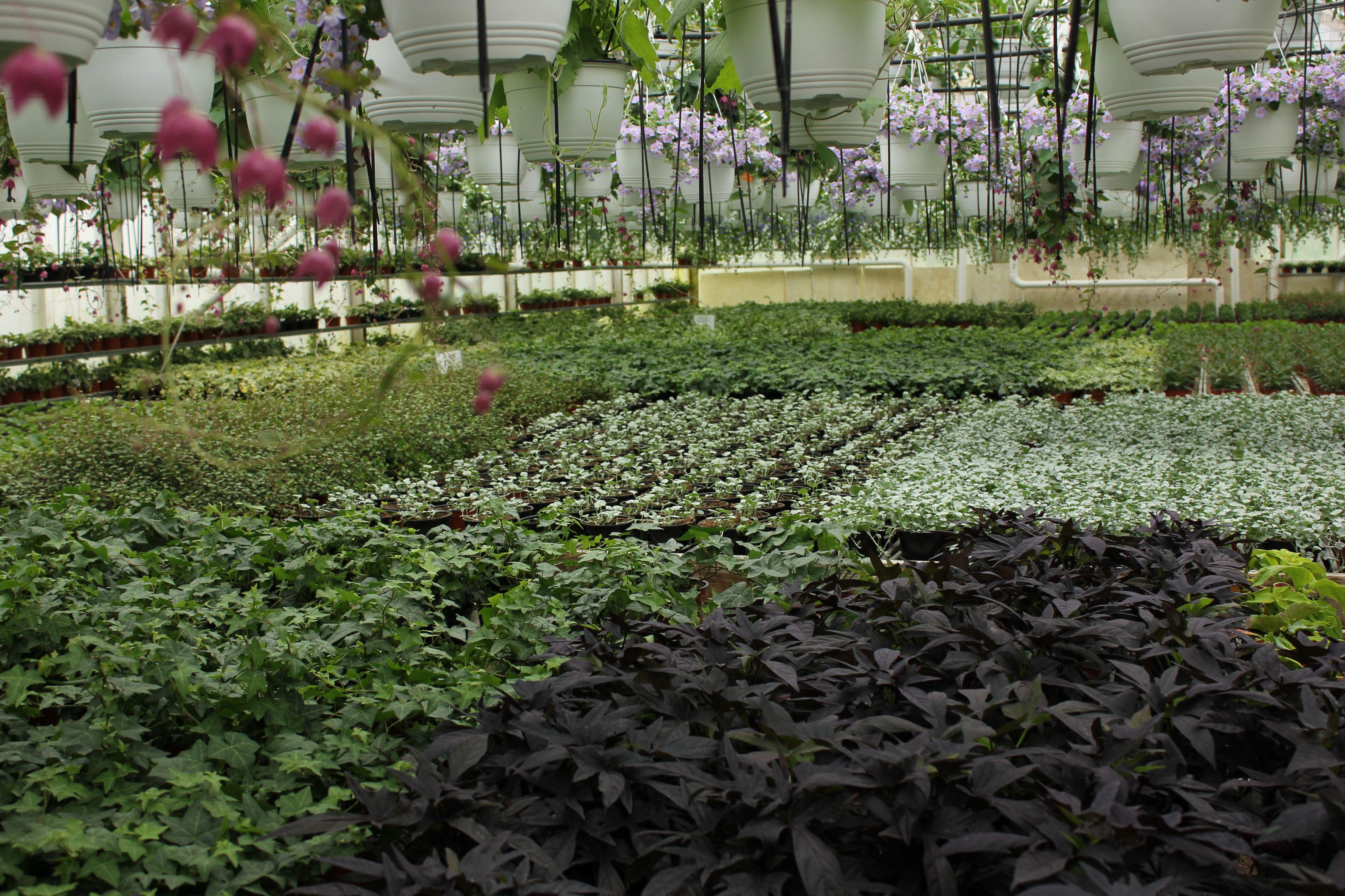 vihreiden kasvien valikoimaa