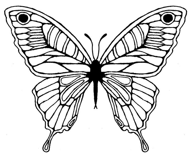 Butterfly Wing Drawing - ClipArt Best | Coloring Pages ...